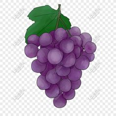 Hand Clipart, Fruit Clipart, Illustration Ligne, Pattern Illustration, Painted Letters, Hand Painted, Grape Drawing, Paint Icon, Fruits Drawing