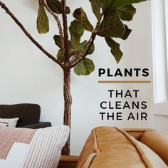 Not only do our lovely houseplants provide a good climate to look at, they also help to cleanse our indoor climate, so we avoid consuming various chemicals and gases. Research also shows that living with plants increases one's production of pleasure hormones and has a de-stressing effect. Air Purifier, Houseplants, Cleanse, Indoor, Dining, Home Decor, Interior, Food, Decoration Home