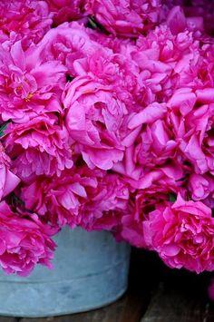Wow! Pink Peonies
