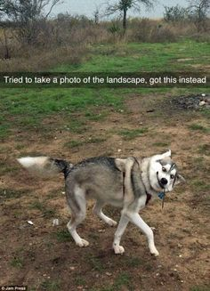 Dog Snapchats show pooches doing funniest (and most adorable) things