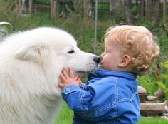 kiss me..Samoyeds love their children
