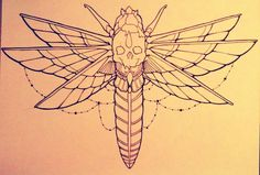Moth drawing done by amazingly talented best friend. I have a traditional version of this tattooed on my stomach :)