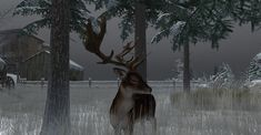 https://flic.kr/p/21Y9B4f | Fallow Deer-009 | The Fallow Deer at Binemust maps.secondlife.com/secondlife/Binemust/132/156/717   Thank you for such beauty, dear Bine Rodenberger!