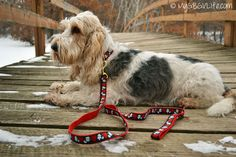 Fashionable #dogcollars from @UpCountryInc The beautiful Hearts and Flowers collar and leash combination