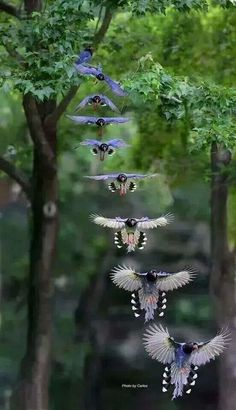 """In-Flight."" ~ Time Lapse Photography By: Carlos."