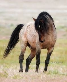 LOVE this color horse!