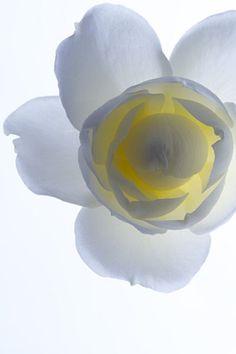 Living Flowers by Masayuki HAYASHI, Japan... http://clipie.it/