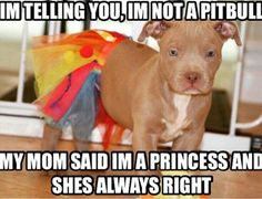 I love pit bulls! I may have a Boston, but I will always love pitties! I miss mine