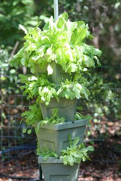 Great idea for growing lettuce ... since I have no place else ;)