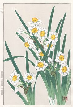Narcissus from Shodo Kawarazaki Spring Flower Japanese Woodblock Prints
