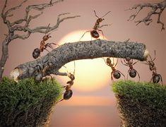 Micro ant photography.