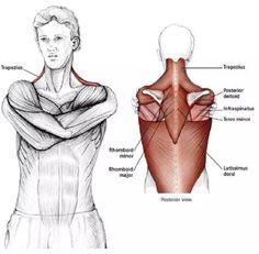 15 Estiramientos para aliviar la tensión en el cuello y los hombros - Mundoamores Pilates, Kickboxing, Stretching, Reiki, Gym, Workout, Health, Fitness, Yoga