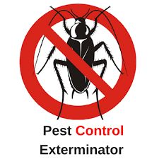 Senmer News Wire:Eliminate Home And Office Pest Problems As Pest Control Richmond Hill Exterminator Offers The Best Pest Control Services Best Pest Control, Pest Control Services, Bug Control, Types Of Bugs, Types Of Insects, Love Photos, Cool Pictures, Flea Spray, Bees And Wasps