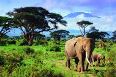 Mt Kilimanjaro! and elephants!