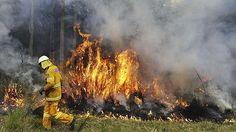 of February Bush fire, Australia Australian Bush, Australian Animals, Natural Phenomena, Natural Disasters, Bushfires In Australia, Koala Bears, Art Terms, Wild Fire, Fire Fighters