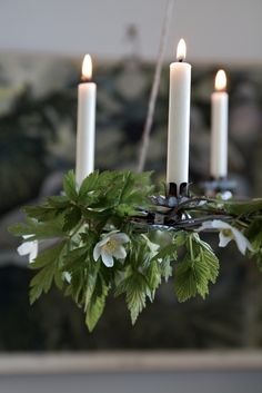Decorating with greenery and candle clips, Finnish-style. www.christmasgiftsfromgermany.com