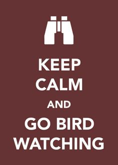 Keep Calm and Go Bird Watching                                                                                                                                                     More