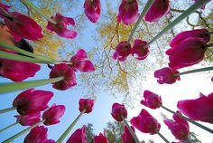 unique perspective of flowers
