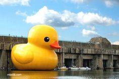 Giant Rubber ducky sculpture by Dutch artist Florentijn Hofman.