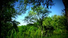 blue sky Sky, Nature, Plants, Blue, Heaven, Flora, Plant, The Great Outdoors, Mother Nature