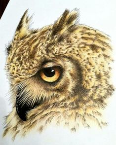 Majestic #coloredpencil #illustration by Dean Wright (@deanwrighty) of an amazing looking owl.  I can tell that Dean's been studying how those feathers flow and spiral as they grow around the owl's face... or he just has a marvelous eye for detail. You can picture the wind silently coursing through the feathers and the owl soars through the sky. Love the beautiful palette and pattern of the golden tan and darker brown and that gorgeous golden eye. I wonder what that eye is looking at? It's…