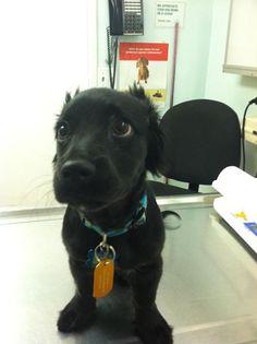 24 cachorros apavorados no veterinário. As reações são extremamente engraçadas!