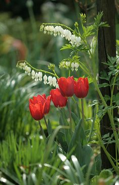 Tulips and bleeding hearts, such a great memory of my childhood springs...