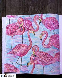 Lindo demais! #Repost @jajkka ・・・ #milliemarotta #coloringbookforadults #coloringbooks #coloring #adultcoloringbooks #adultcoloringbook #flamingo #flamingos #drawing #animals #birds #drawing #drawingbird #kohinoor #pencils