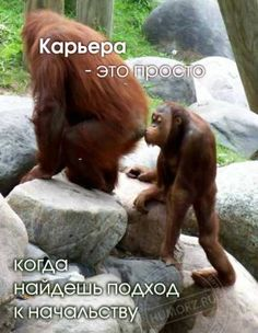 Bambi, Man Humor, Embedded Image Permalink, Animals And Pets, Philosophy, Monkey, Real Life, Funny Pictures, Inspirational Quotes