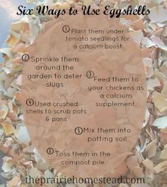 6 uses for Egg Shells