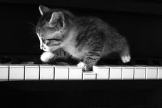 The piano player ...