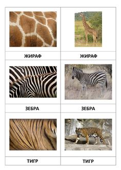 Page 1 of 7 Science Montessori, Diy Montessori, Montessori Toddler, Montessori Materials, Animal Activities, Preschool Activities, Animal Coverings, Le Zoo, Preschool At Home