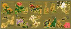 四季花鳥図巻 酒井抱一画(東京国立博物館蔵)  1 福寿草(四季花鳥図巻(部分)) 、2 桜草(四季花鳥図巻(部分)) 、3 菫と木瓜(四季花鳥図巻(部分)) 、4 土筆(四季花鳥図巻(部分)) 、5 藤(四季花鳥図巻(部分)) 、6 垂れ桜と燕(四季花鳥図巻(部分)) 、7 額紫陽花(四季花鳥図巻(部分)) 、8 辛夷(四季花鳥図巻(部分)) 、9 河骨と鷭(四季花鳥図巻(部分)) 、10 牡丹と芍薬と蝶(四季花鳥図巻(部分))