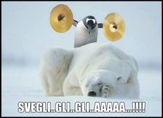 Penguin Meme - Penguin Funny - Funny Penguin meme - - funny memes with clean humor Funny Animal Pictures, Funny Animals, Animal Pics, Penguin Pictures, Stupid Animals, Adorable Animals, Funny Jokes, Hilarious, Penguin Love
