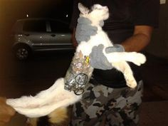 Face It Norge - Cat used in Brazil prison smuggling try