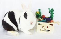Halloween Trick or Treat Box : Pet Rabbit Toys, Homemade Toys for Rabbits