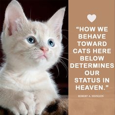 Cat Love Quotes, Heaven, Cats, Movie Posters, Movies, Animals, Sky, Gatos, Animales