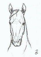 http://www.elfwood.com/farp/horses/horses.html