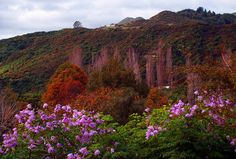 Wanganui New Zealand New Zealand, Mountains, Heart, Nature, Photography, Travel, Voyage, Viajes, Traveling