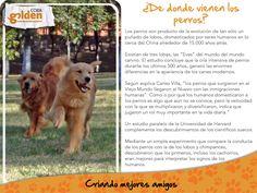 Sabes de donde vienen los perros?? te decimos un poco de su historia