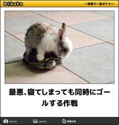 spotlight-media.jp article 244250305105083438 image 1454544709777