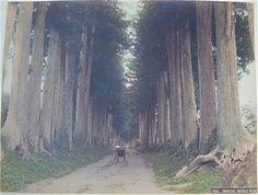 Imaichi by Kusakabe Kimbei