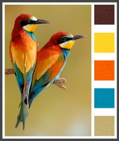 color pallet of three bright primary colors and two neutrals ... beautiful birds ...