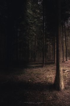 Disappearing into the Woods' - Oxfordshire, UK - By Freddie Ardley Photography