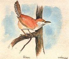 ARTWORK OFBIRDS- WRENS - Bing Images