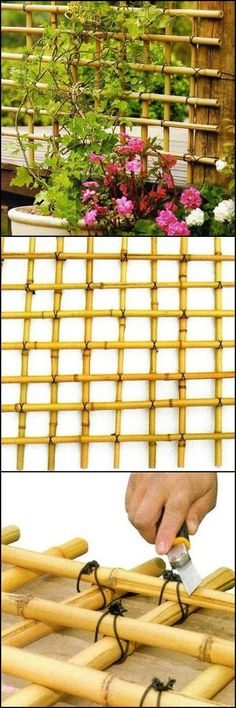 How To Build A Trellis From Bamboo theownerbuilderne. If there's a handmade trellis that perfectly fits any garden, this would be it. Why not make a trellis using bamboo! Cheap Trellis, Bamboo Trellis, Diy Trellis, Bamboo Fence, Garden Trellis, Trellis Ideas, Plant Trellis, Bamboo Poles, Backyard Shade