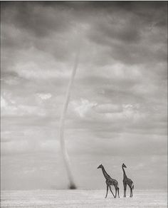 Nick Brandt Photography