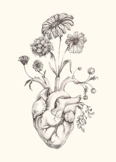 """IMPROVED 5x7"""" PRINT of original drawing """"Blooming Heart"""" on NEW ivory paper- graphite, art, anatomy, floral, heart, valentine:"""