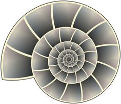 Two lynda.com tutorials that show you how to create an evenly spaced, arithmetically defined spiral in Adobe Illustrator, and how to draw a perfect nautilus shell.
