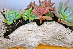 Faux bois planter. Garden Planters, Succulents, Plants, Succulent Plants, Planters, Plant, Planting